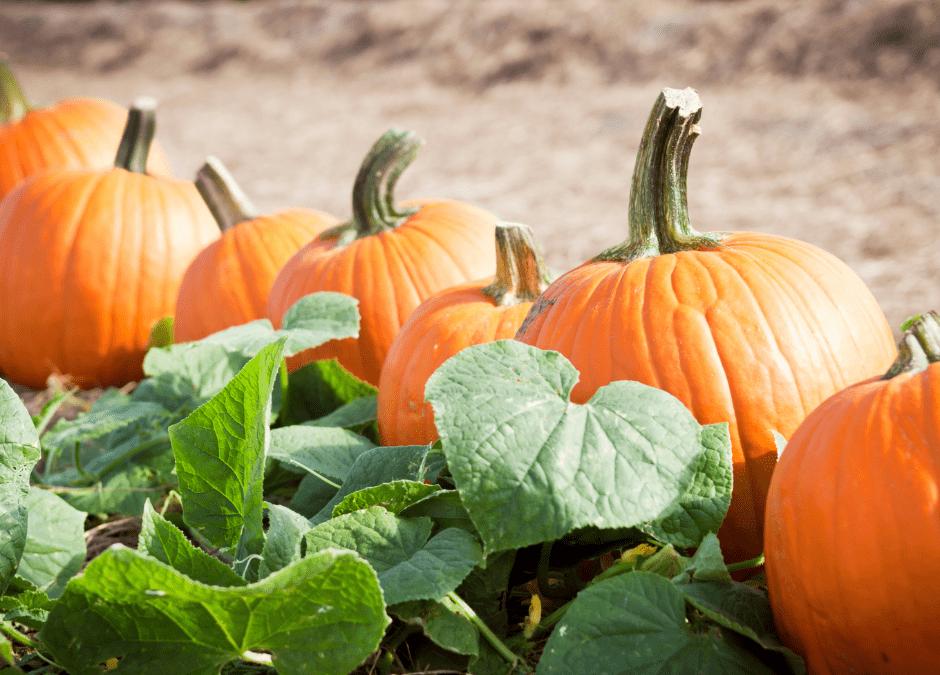 Pumpkin Patch Field Trips 2021